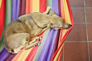 a web design firm makes life easier, like a dog in a hammock